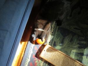 Nefertiti with feeder ball