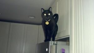 Nefertiti on the fridge