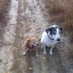 Two dog companions
