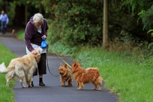 woman walking three dogs