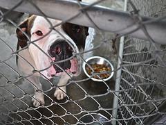 Dog behind fence