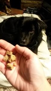 Rewarding quiet behavior with treats—not just for puppies!