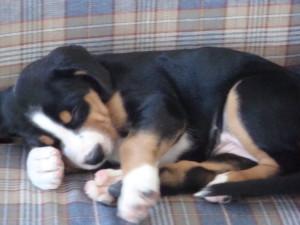 A sleepy puppy