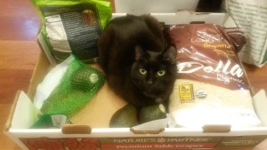 cat sitting in a box with groceries