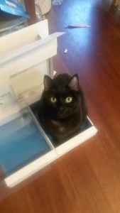 cat sitting in an empty electronics box
