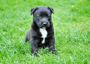 puppy sitting in a field