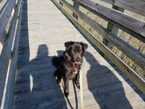 Dog sits on wooden pier facing into sun with human shadows over him.