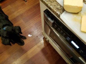 Dog stands on floor near counter with cheese on a cutting board.