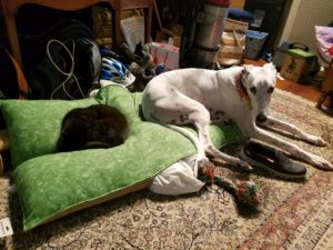 cat lying on a dog bed while a dog sits on other half